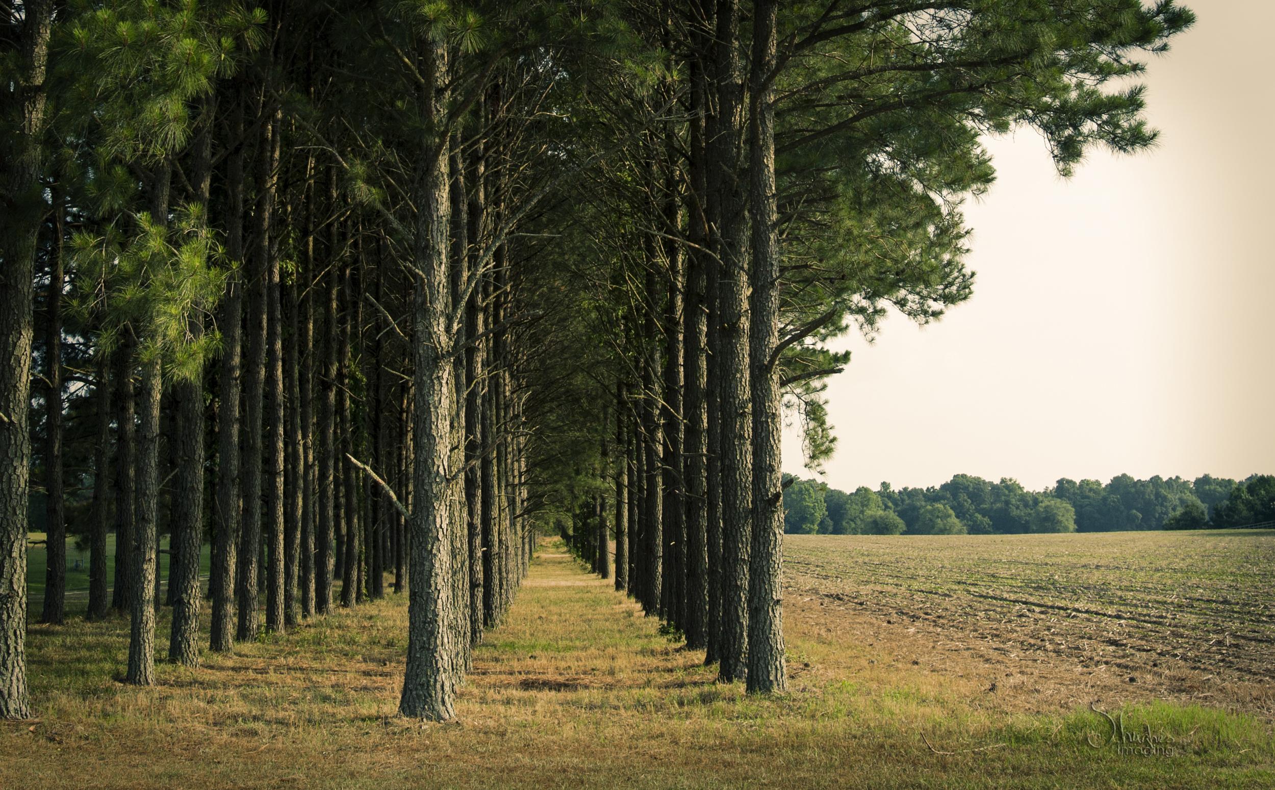 OBXDrive&Destination_TreeLine_COVER.jpg