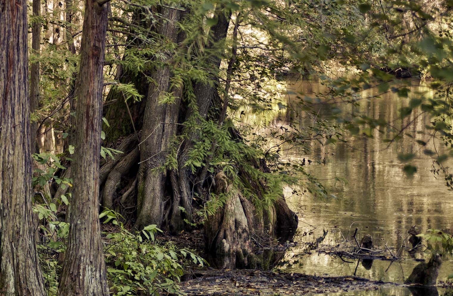 Lumbee River /