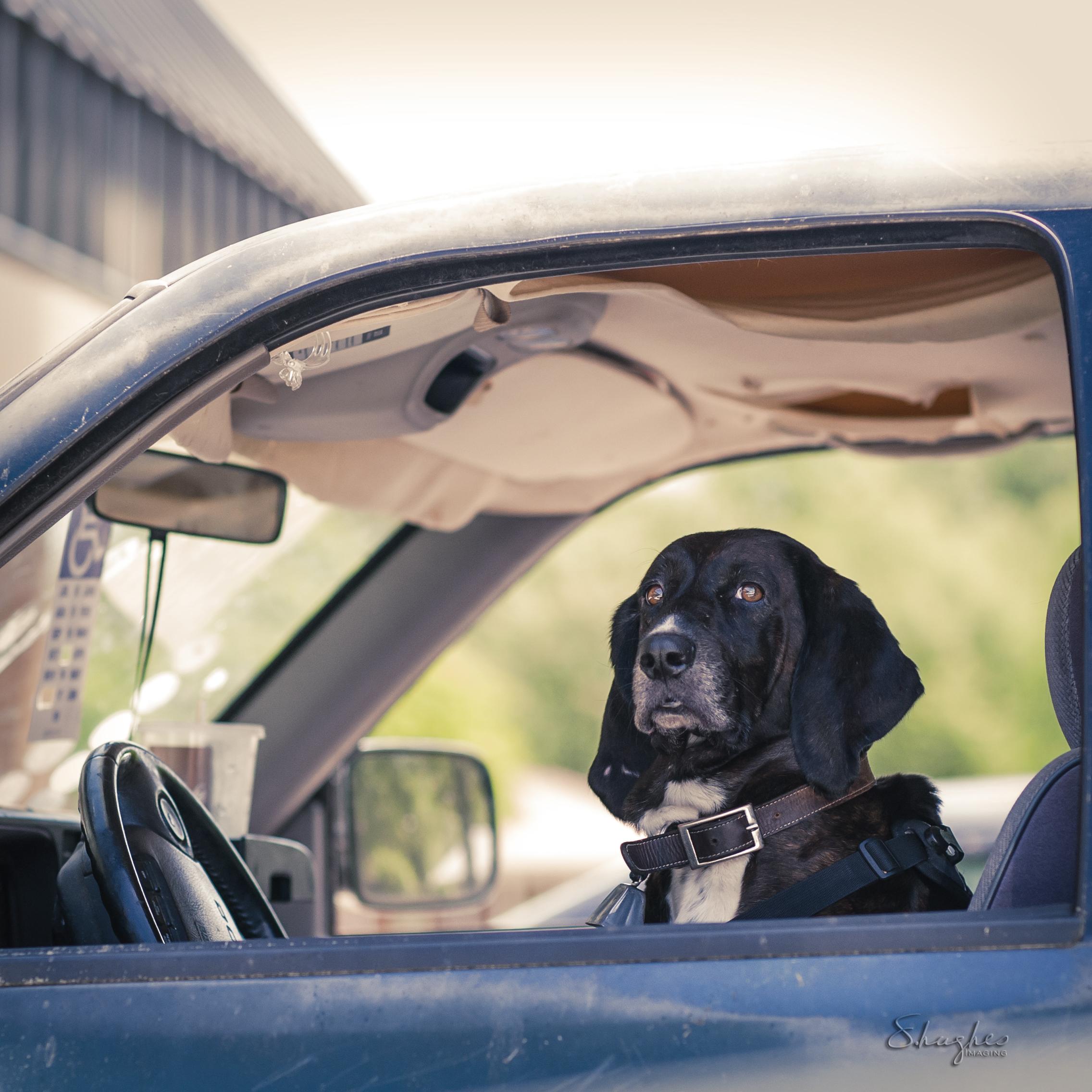 Random dog in a truck