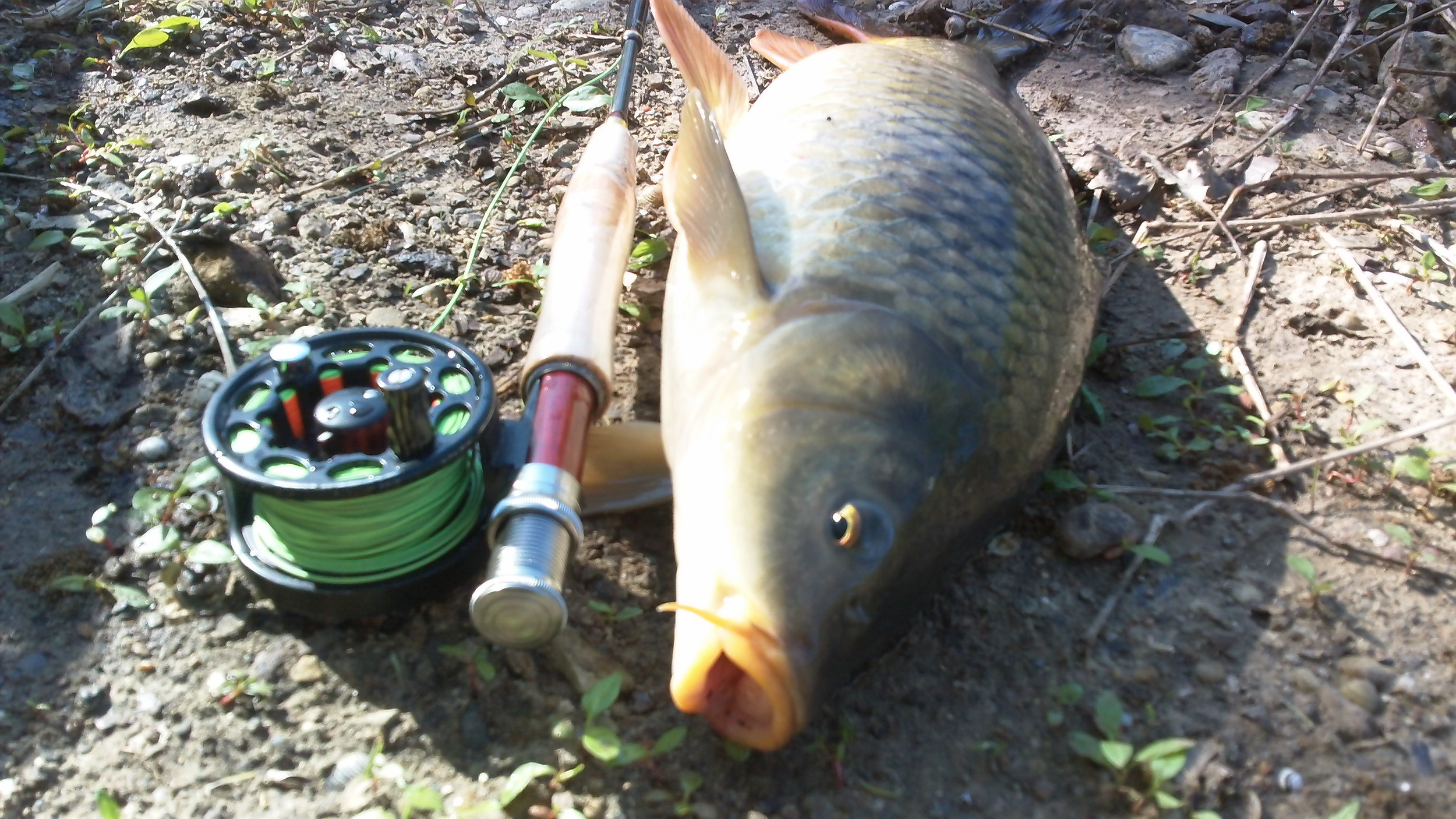 A dinker on the 4 weight!