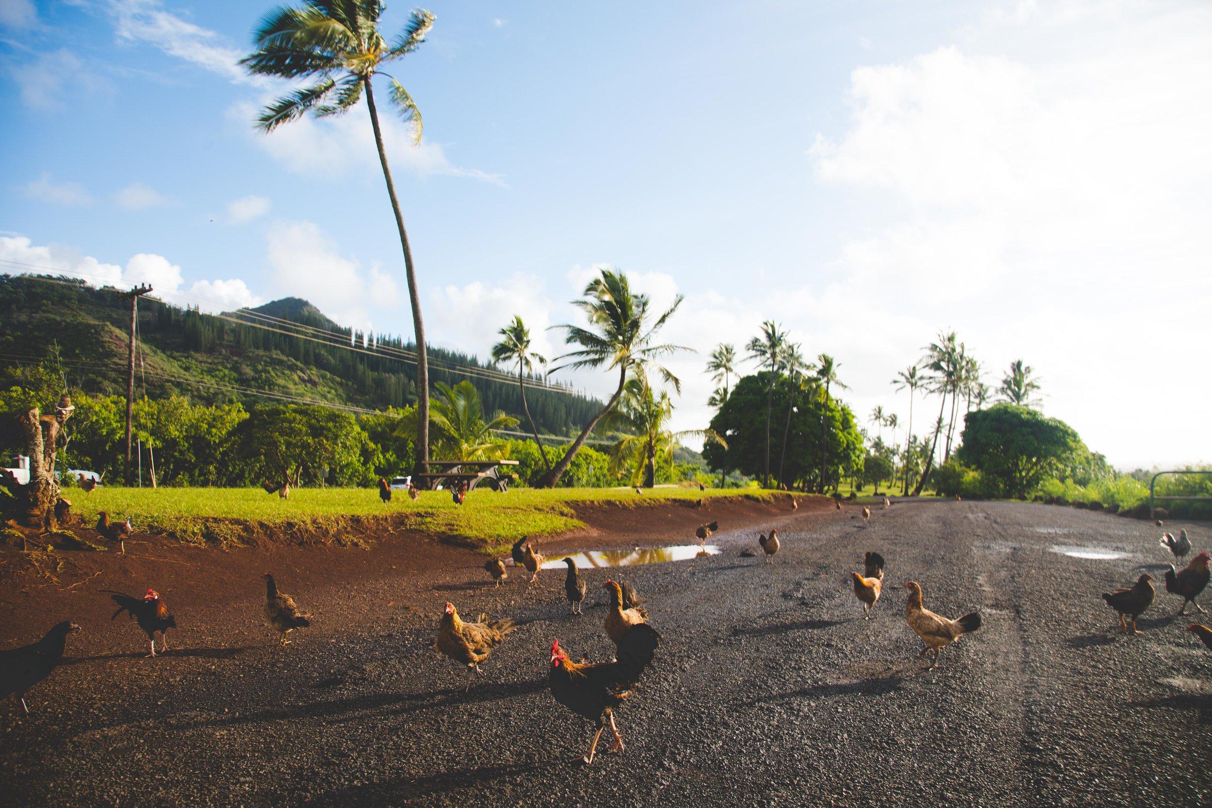 Kauai-7936.jpg