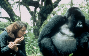 The Gorilla Blog