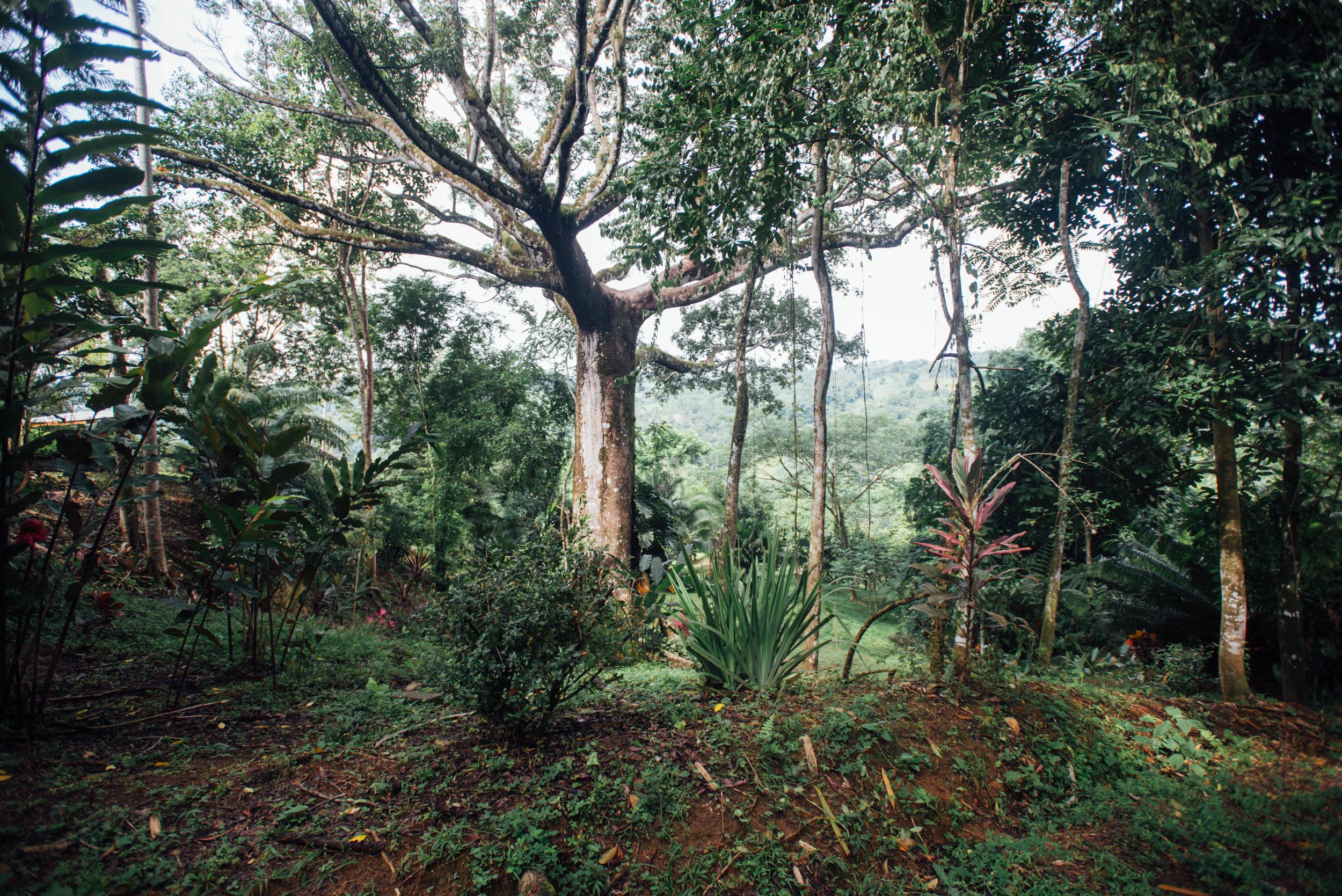 Corcovado, National Park, Costa Rica