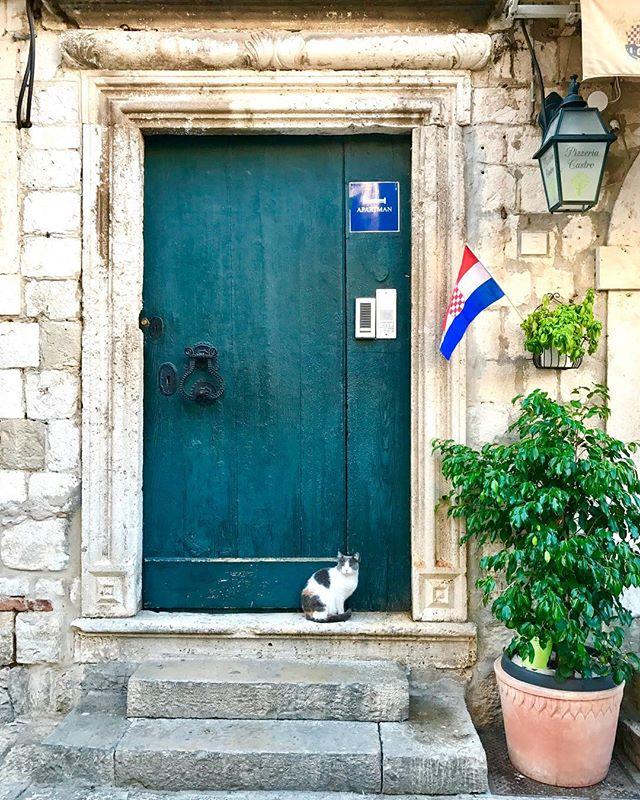 Cats of Dubrovnik! ... ... ... #dubrovnik #croatia #croatiafulloflife #wonderlustcroatia #doorsofinstagram #catsofinstagram #travel #travelgram #instatravel #bbctravel #travelandleisure #lonelyplanet #condenast #natgeotravel #natgeoyourshot #europe #adriatic #photography #travelphotography #photooftheday #picoftheday