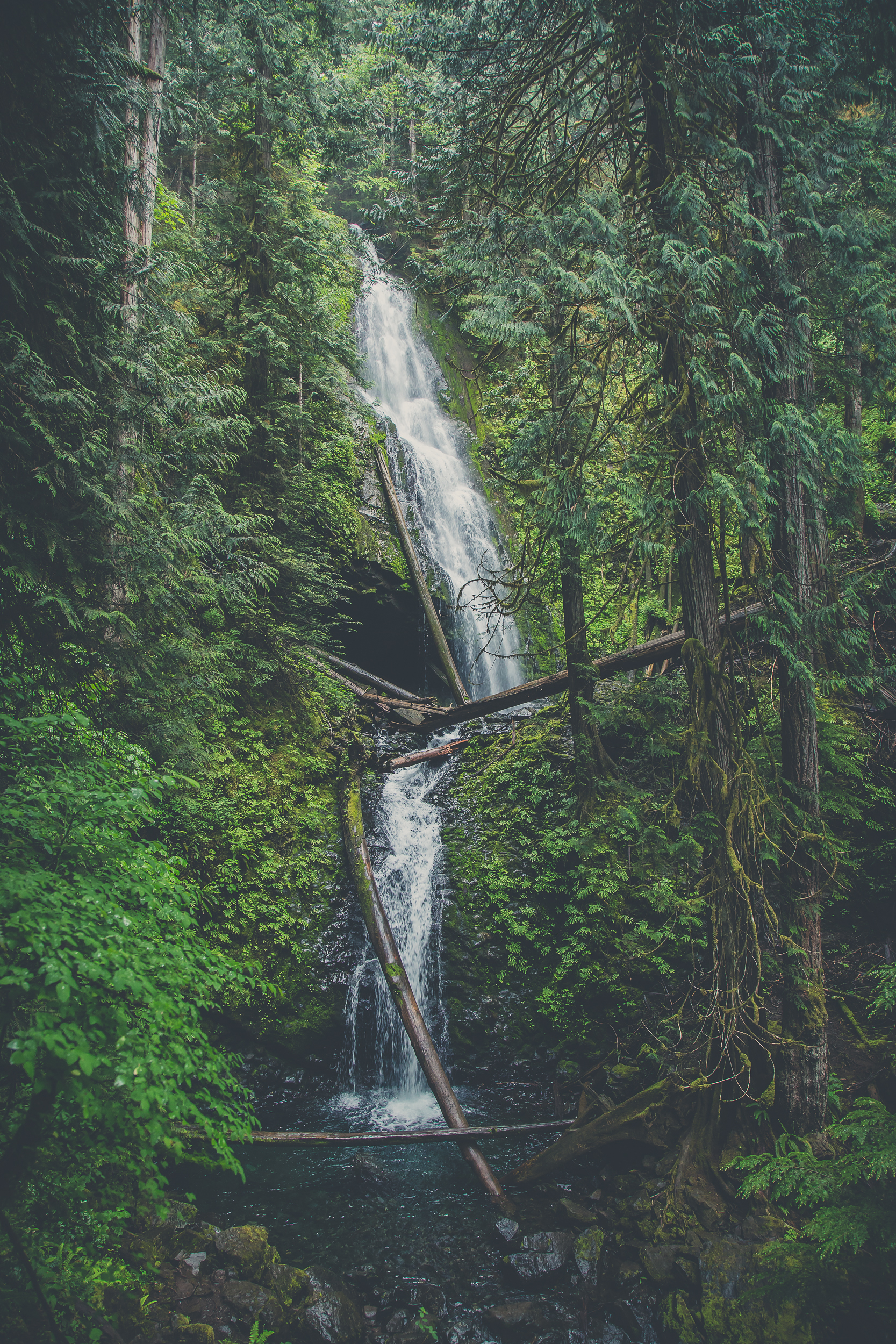 pacific-NW-forest-waterfall.jpg
