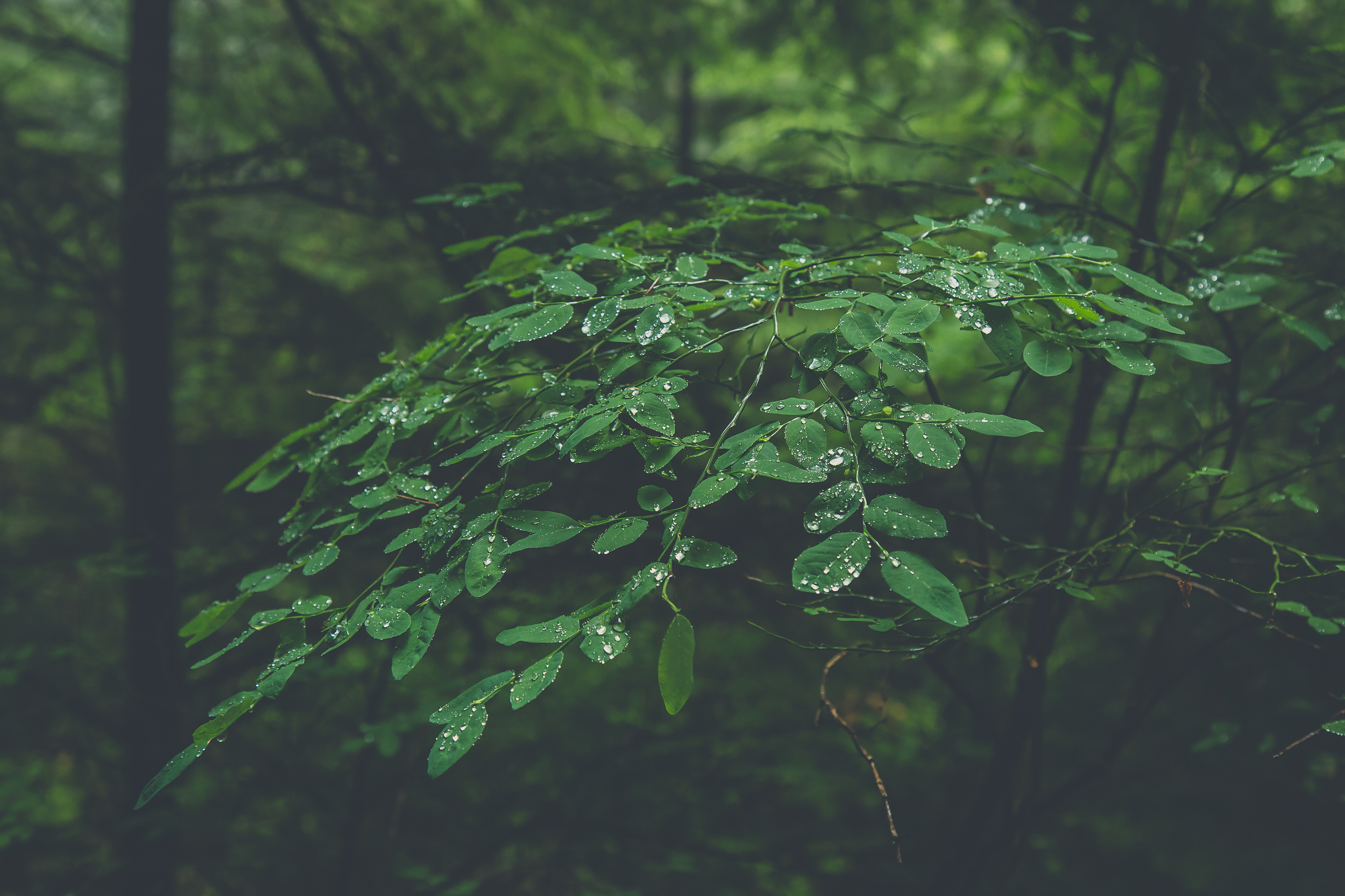 forest-leaves-with-dew-drops.jpg