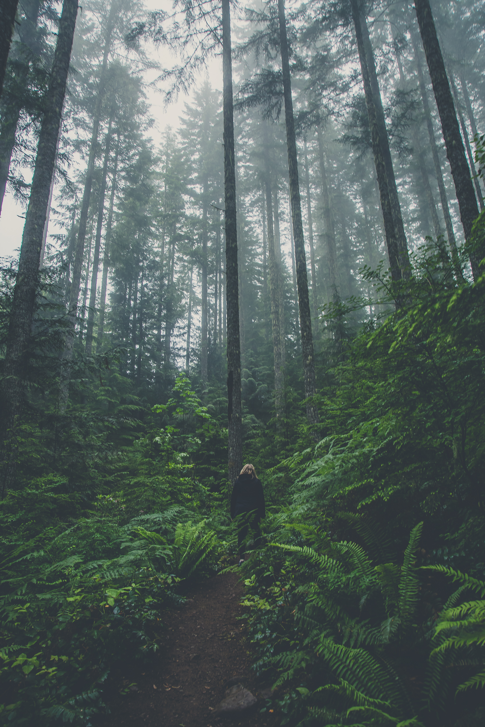 hiker-in-green-forest.jpg