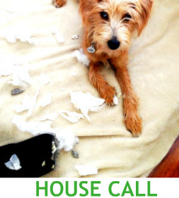 House Call with title.jpg