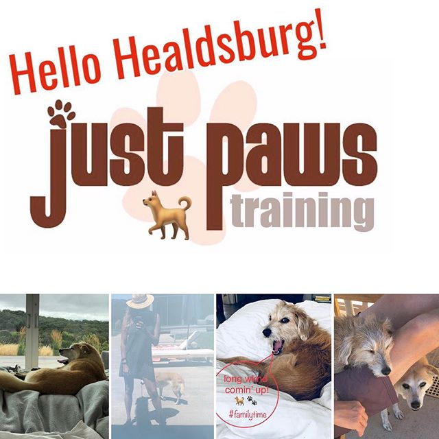 Happy long Labor Day wknd! Celebrating our 1st holiday here in Healdsburg 🐾🐕🐩🐶 Lots of fur babes n' paws round town! #justpawstraining #happydogs #domorewithyourdog #familytime🐾