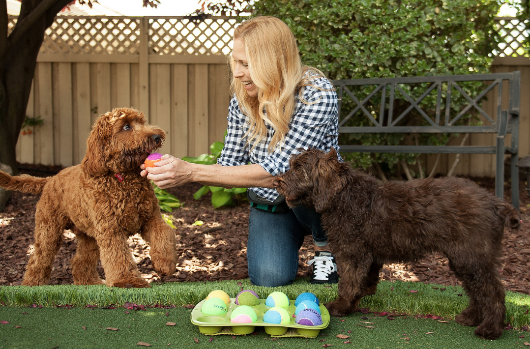 learn how to keep your dogs engaged -