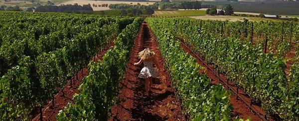 vineyard-600.jpg