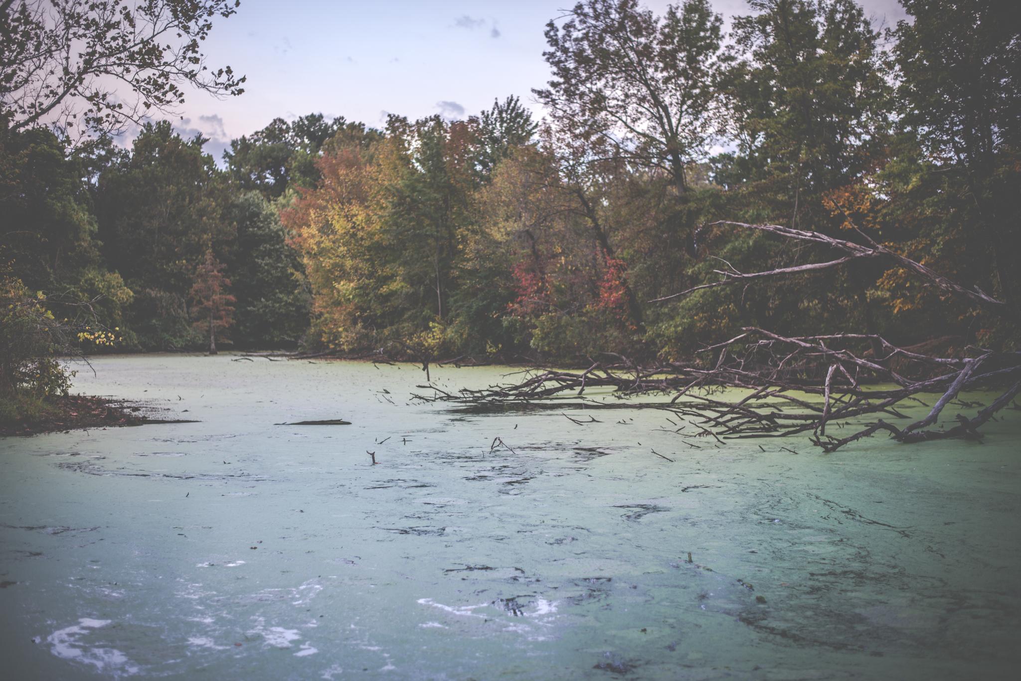 Howell Wetlands