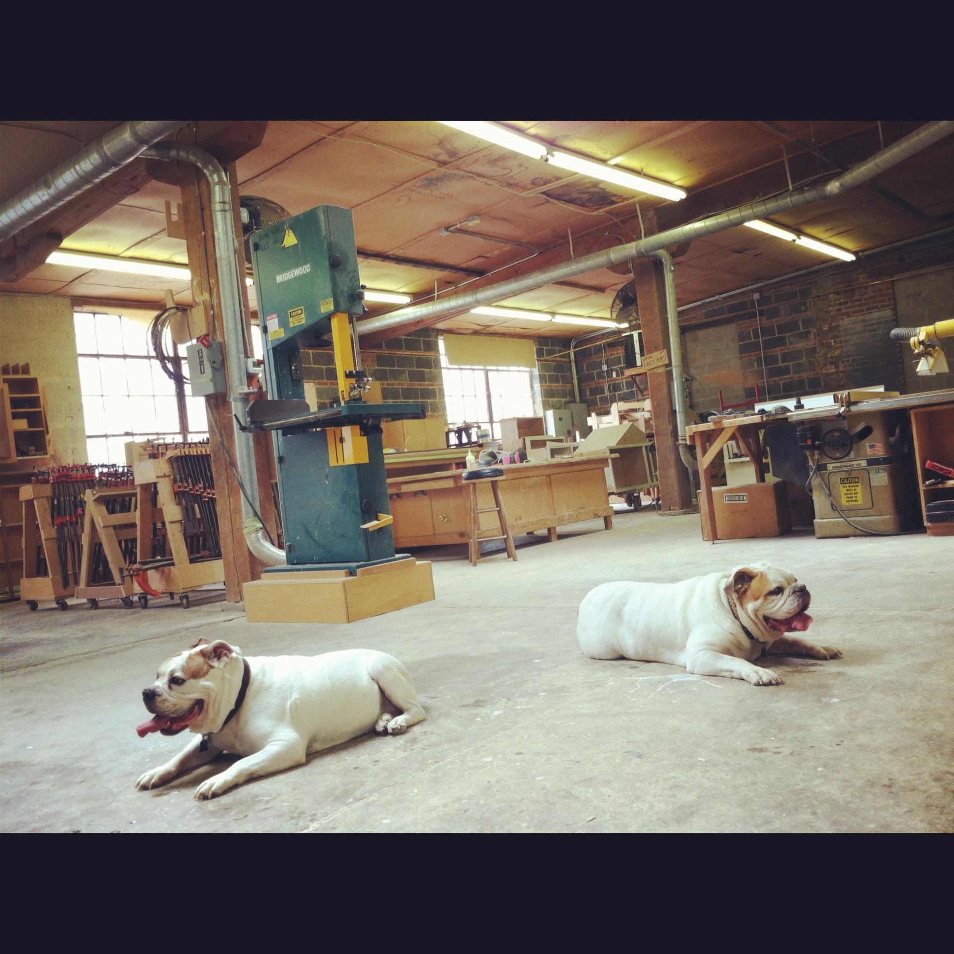 Vangarde mascots: Irie Dog and Max