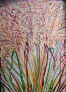 Backdoor Dense Grasses.JPG