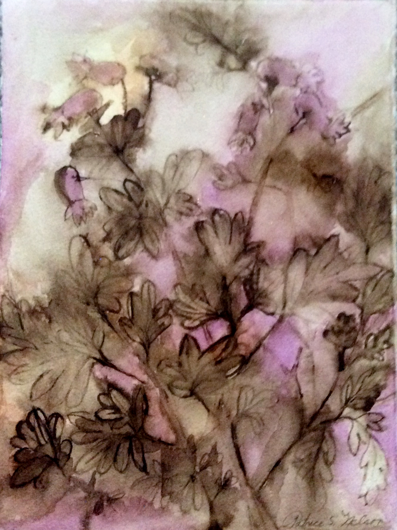 Fading, Threatened, Pink Corydalis.JPG