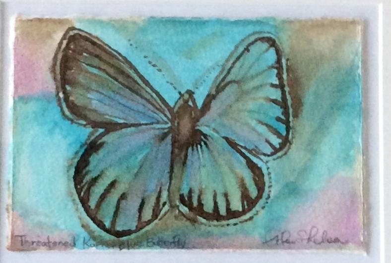 Fading, Threatened, Karner Blue Butterfly.JPG