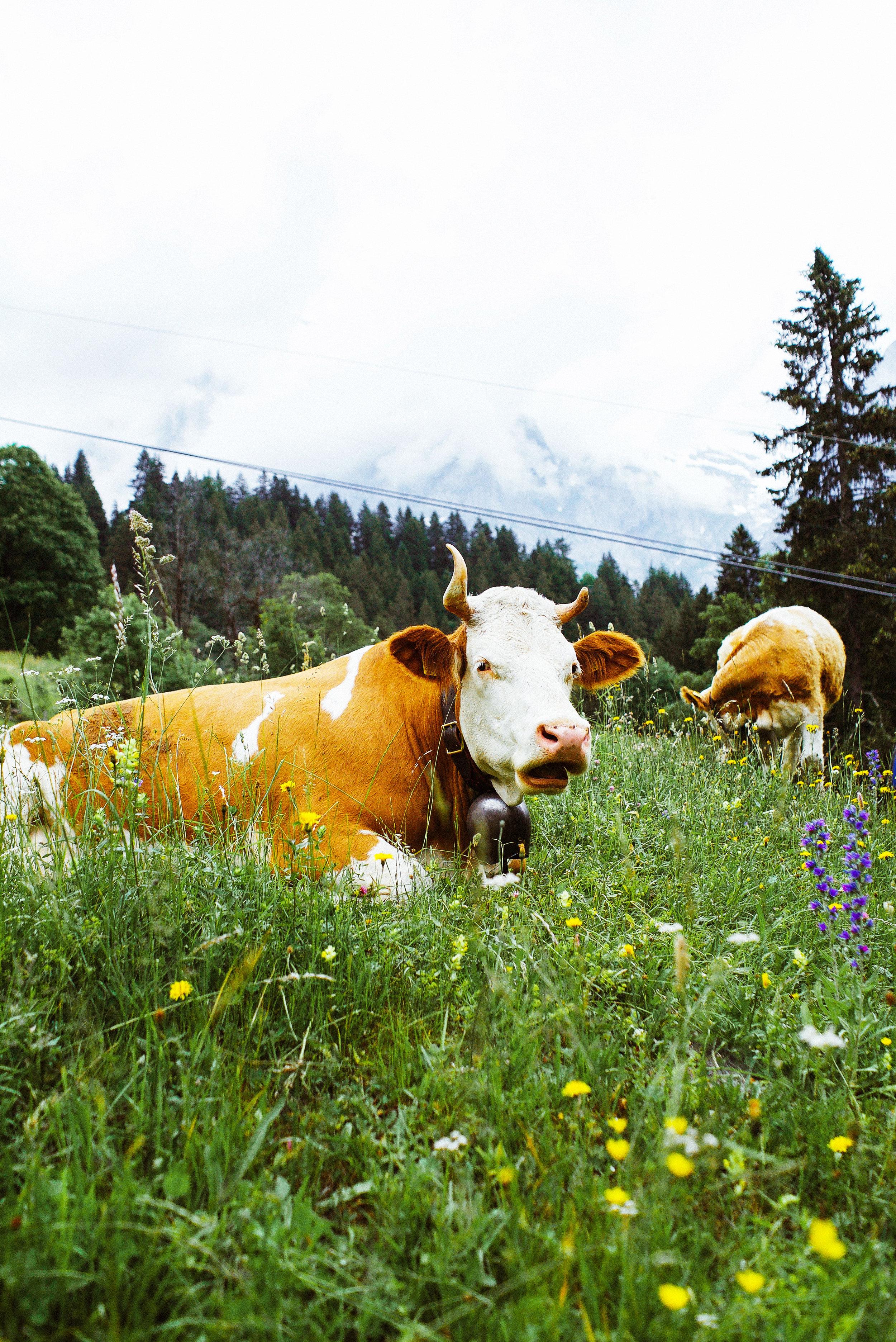 Mt. Eiger, Bernese Alps, Switzerland