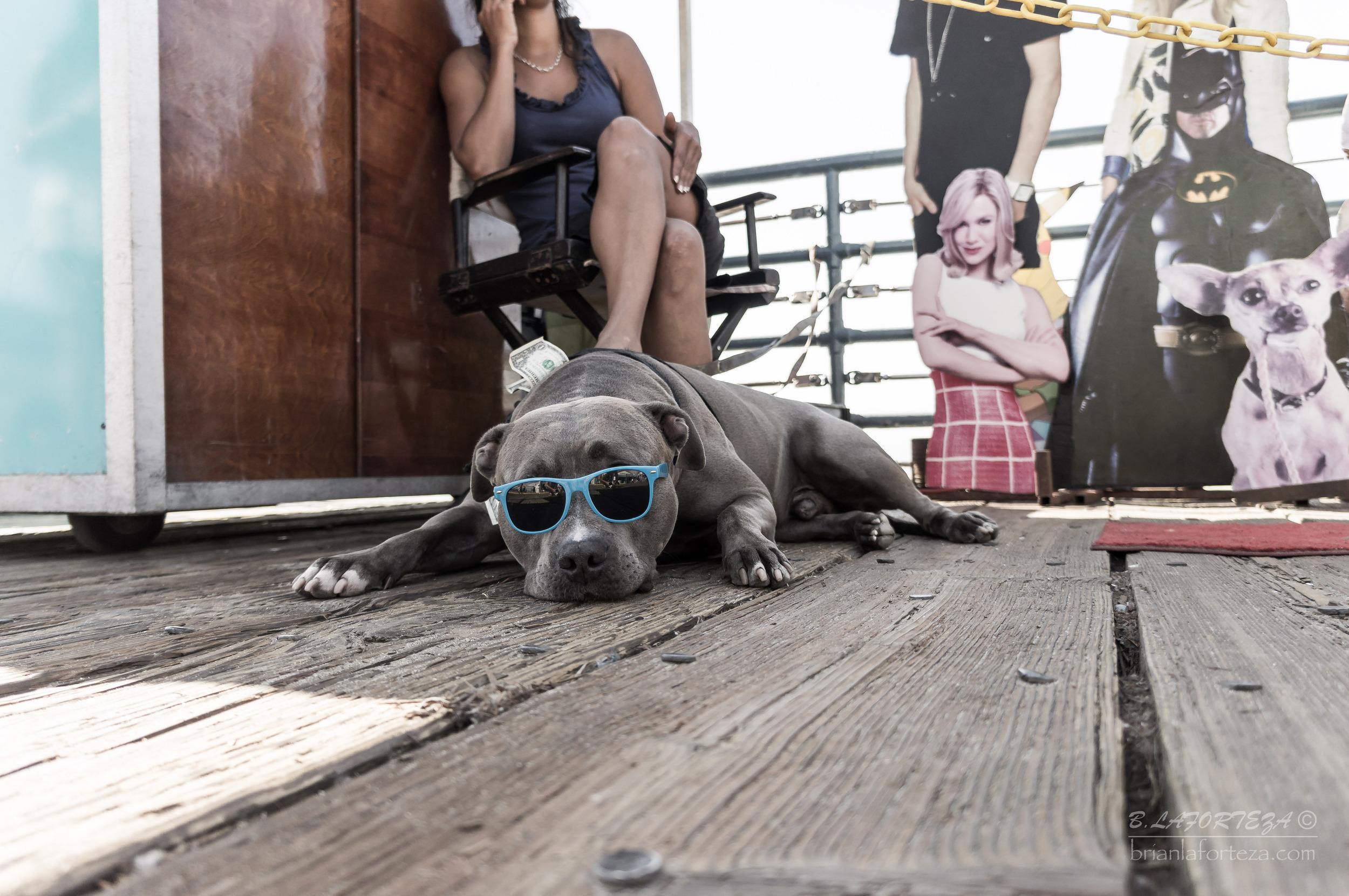 Santa Monica Dog.jpg