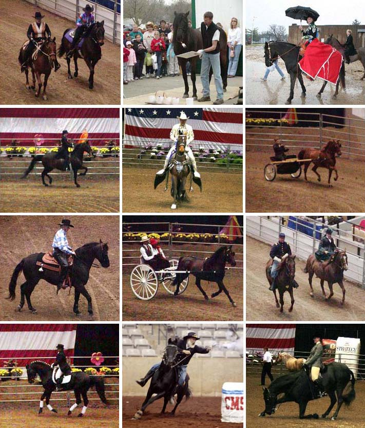 Morgans at the Midwest Horse Fair