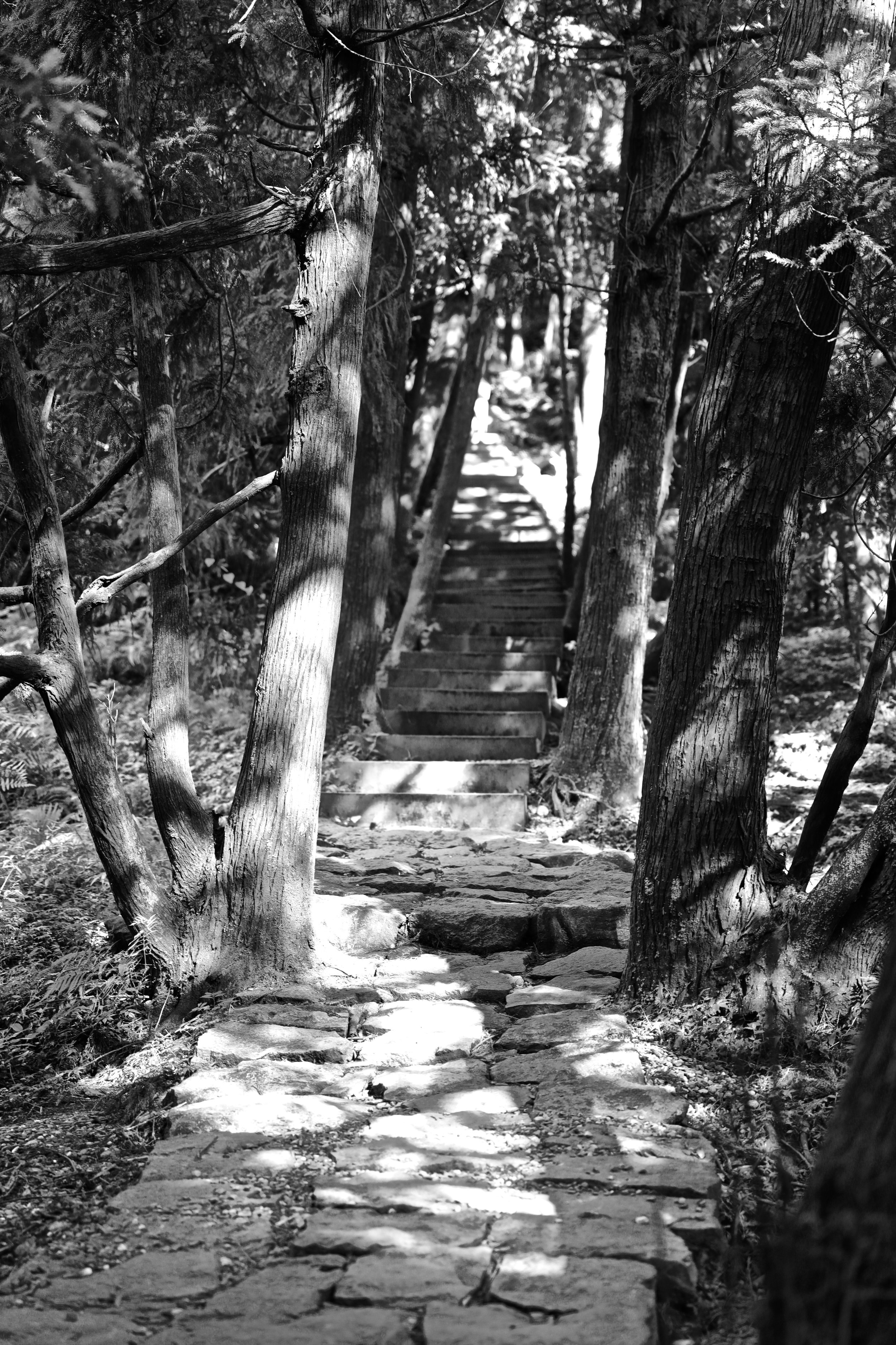Dr Yu-Ta Chien took us on this outing to Yangminshan National Park. These paths used to be walked on in pretty much bare feet (occasionally straw was used) by seafood sellers making their way from Keelung to Taipei markets.