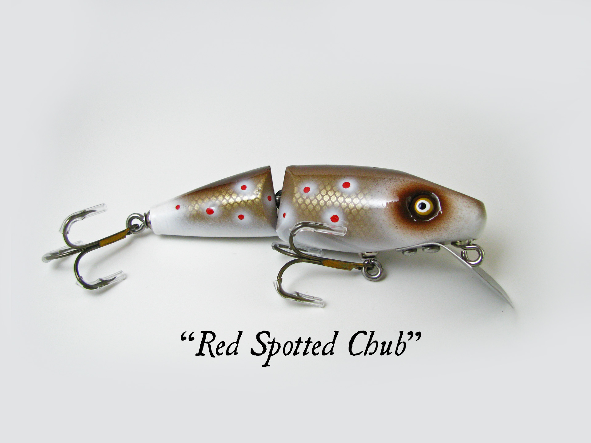 Super Shark_Red Spotted Chub.jpg