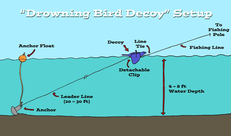 Drowning Bird Decoy Setup.jpg