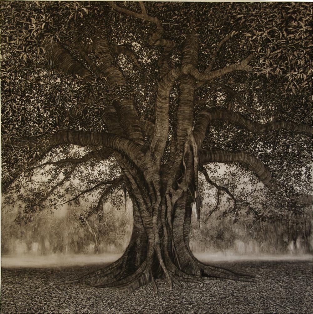 Sanctuary Fig, 2006. Oil on paper. 89cm x 89cm.