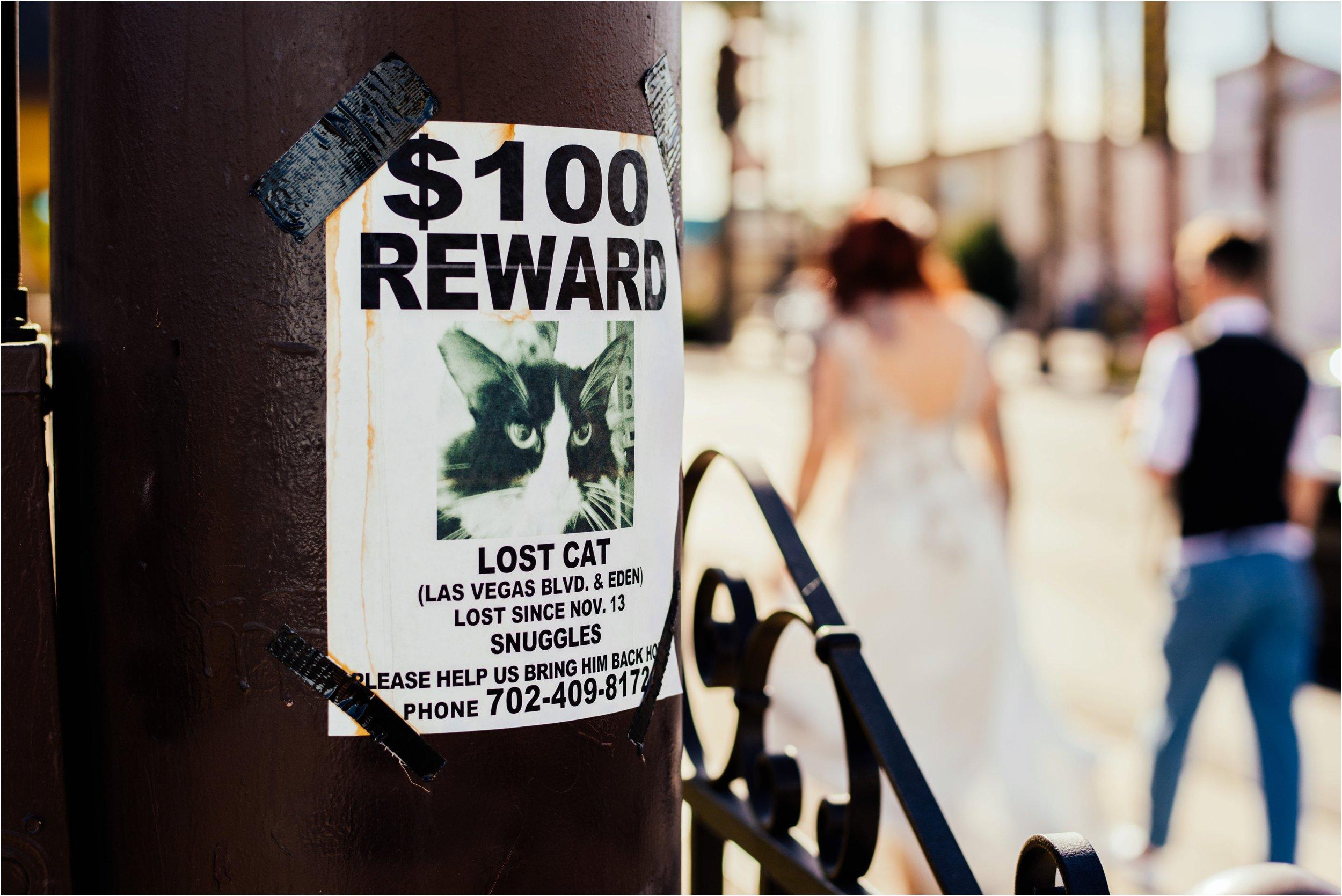 Vegas elopement destination wedding photographer_0121.jpg
