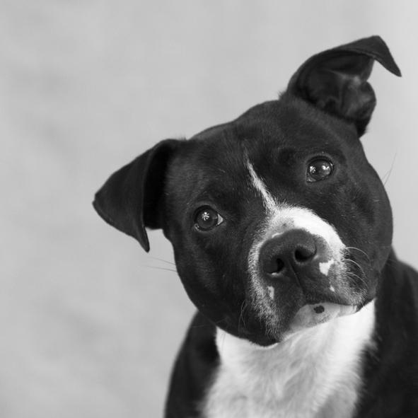 Brutus the studio dog.