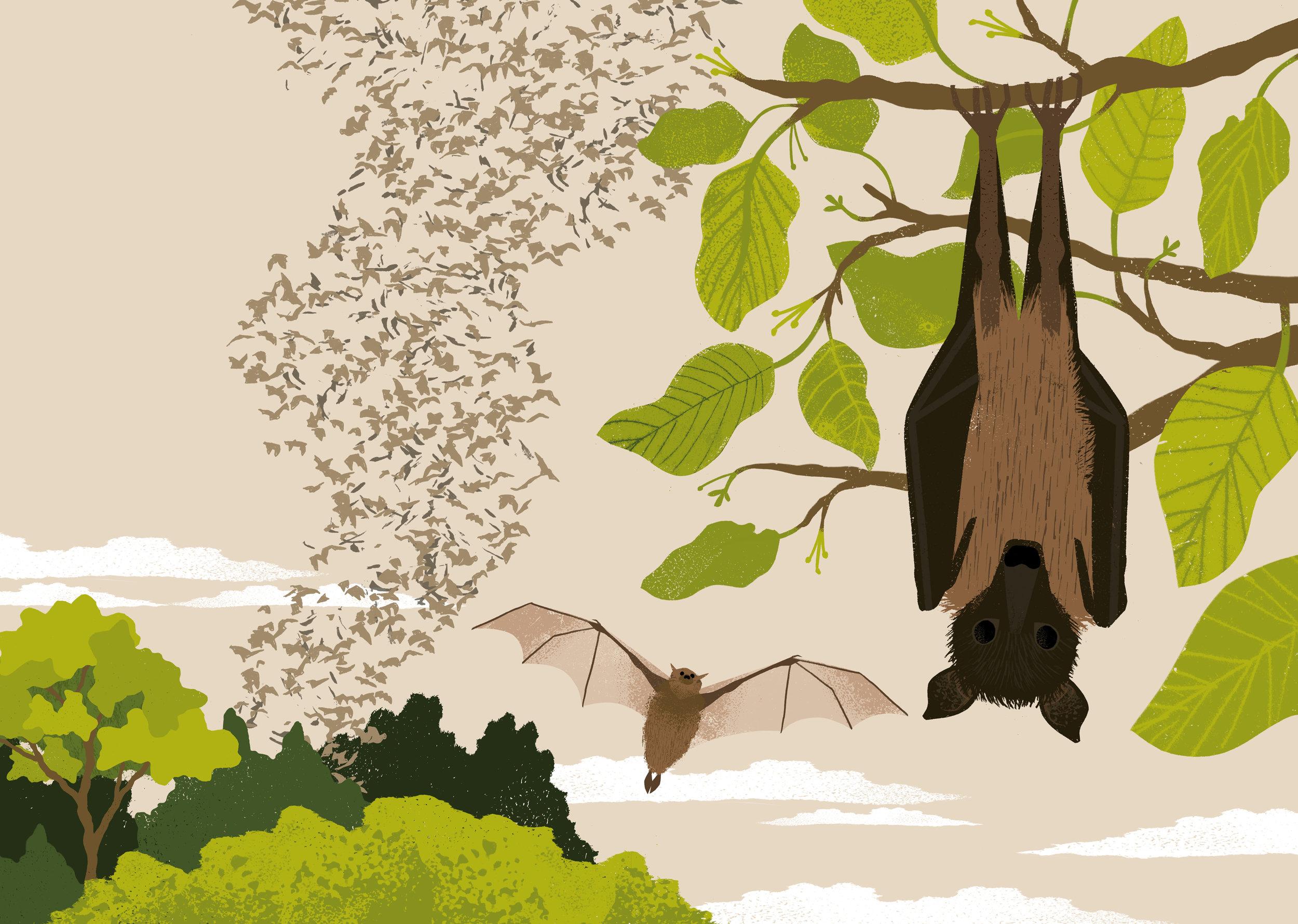 bats-spread.jpg