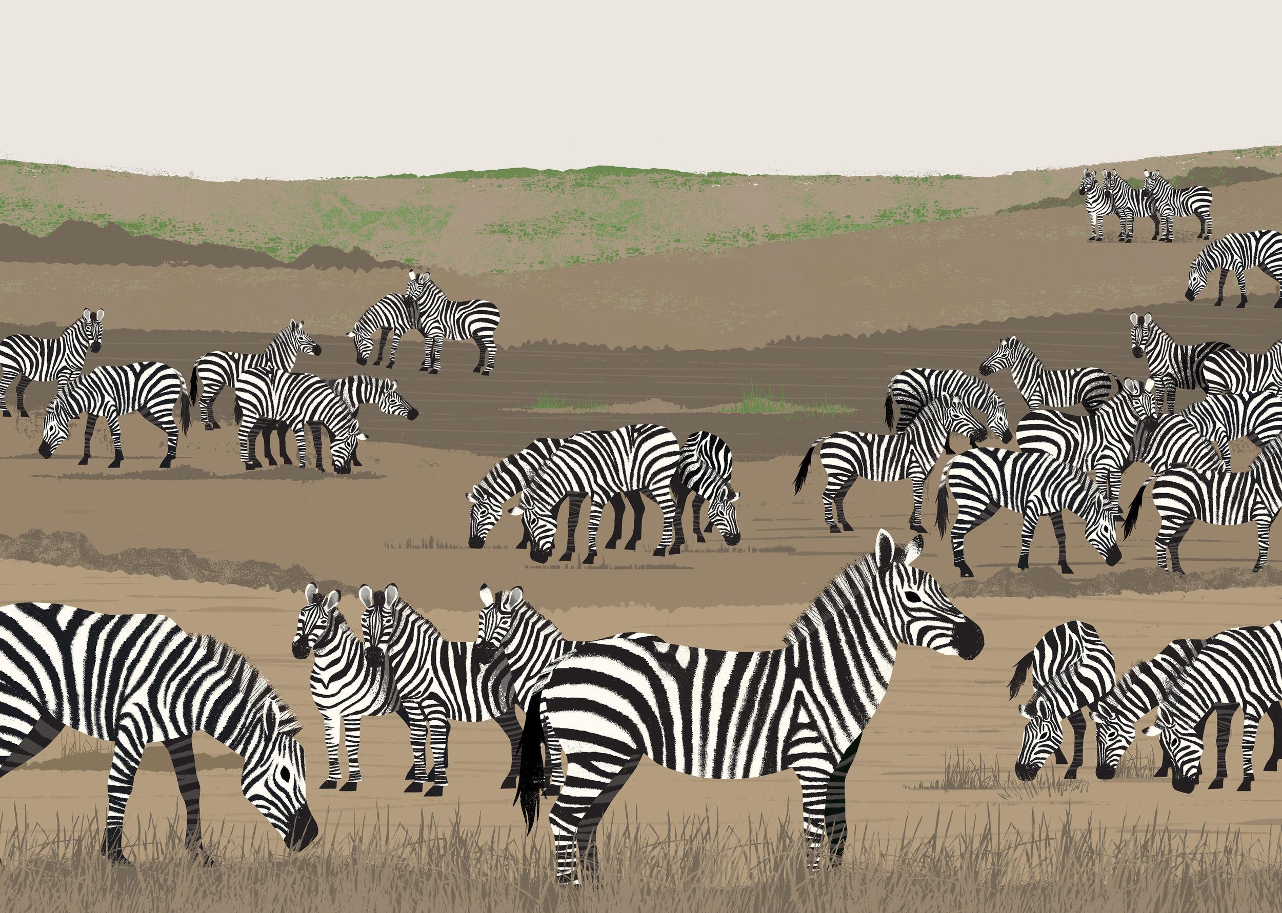 Zebra-spread.jpg