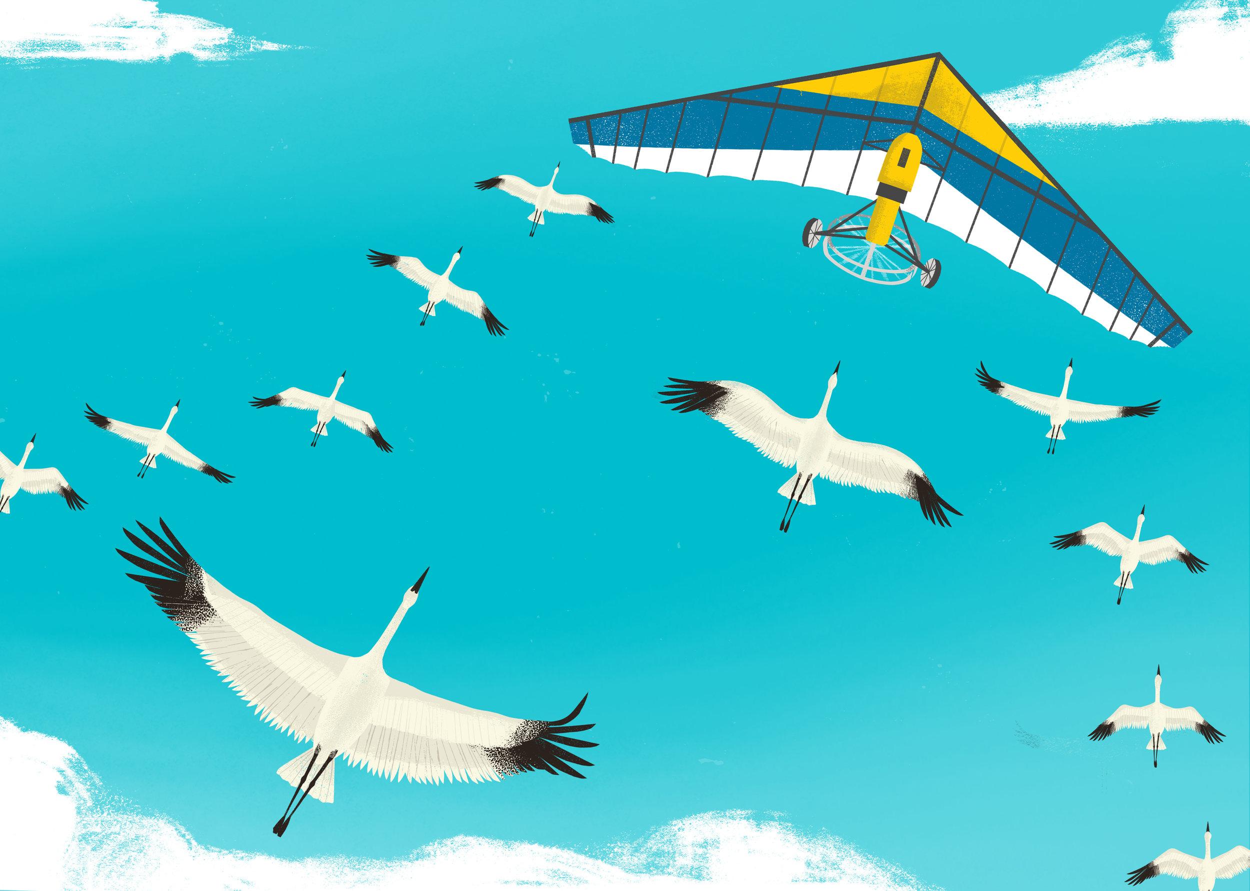 cranes-spread.jpg