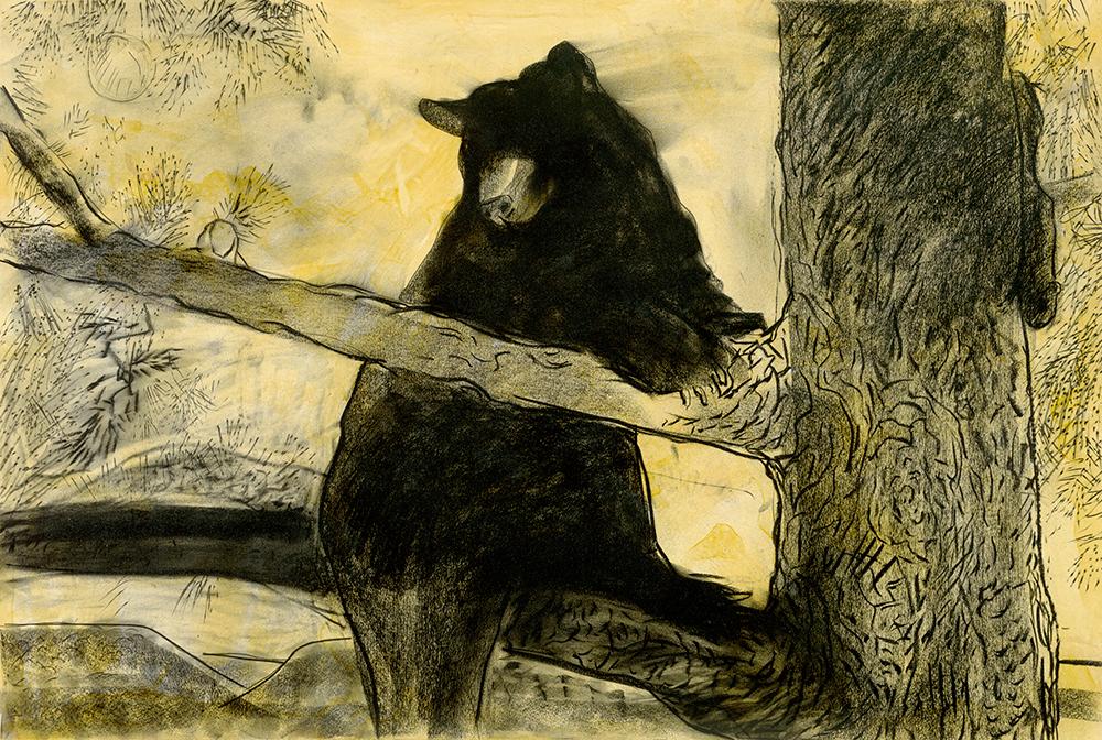 Treed Bear  30 x 44