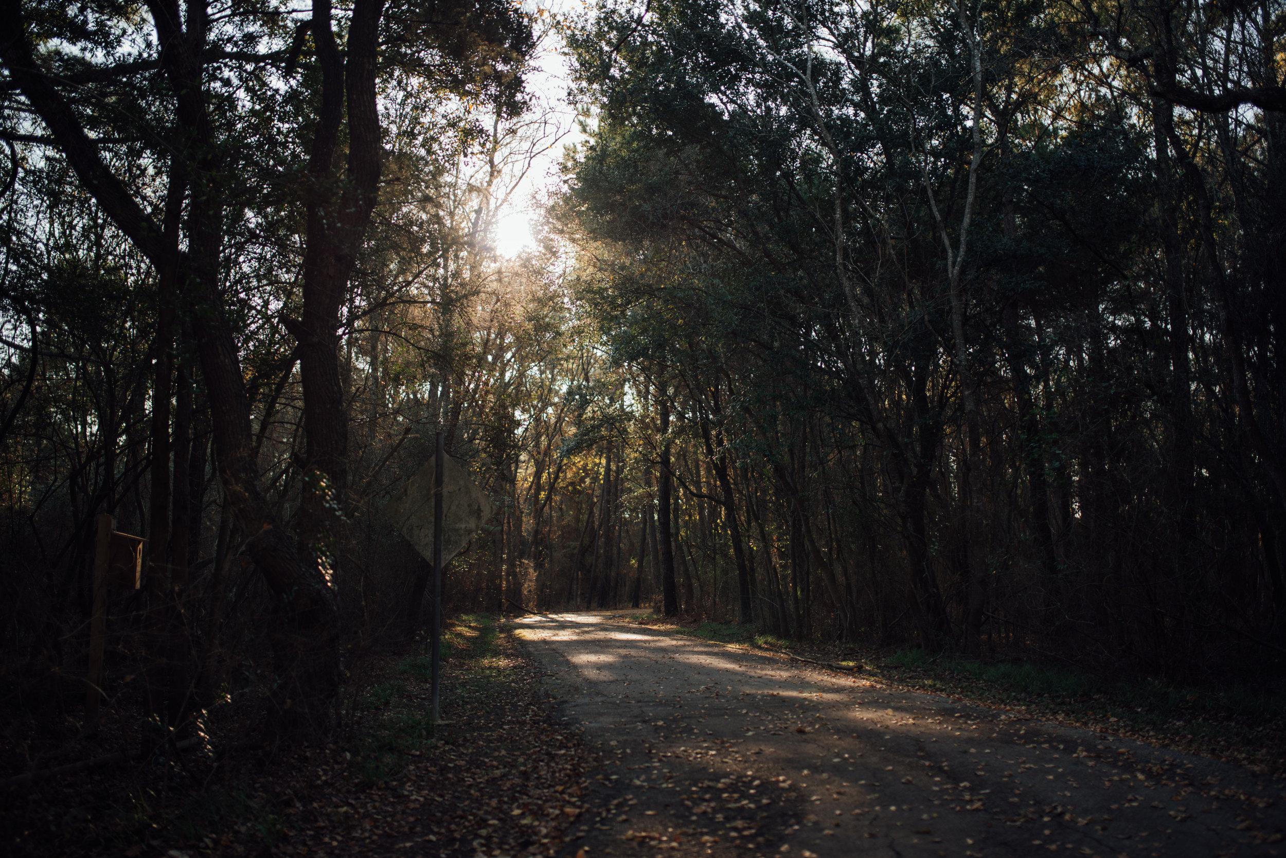 trail16.jpg