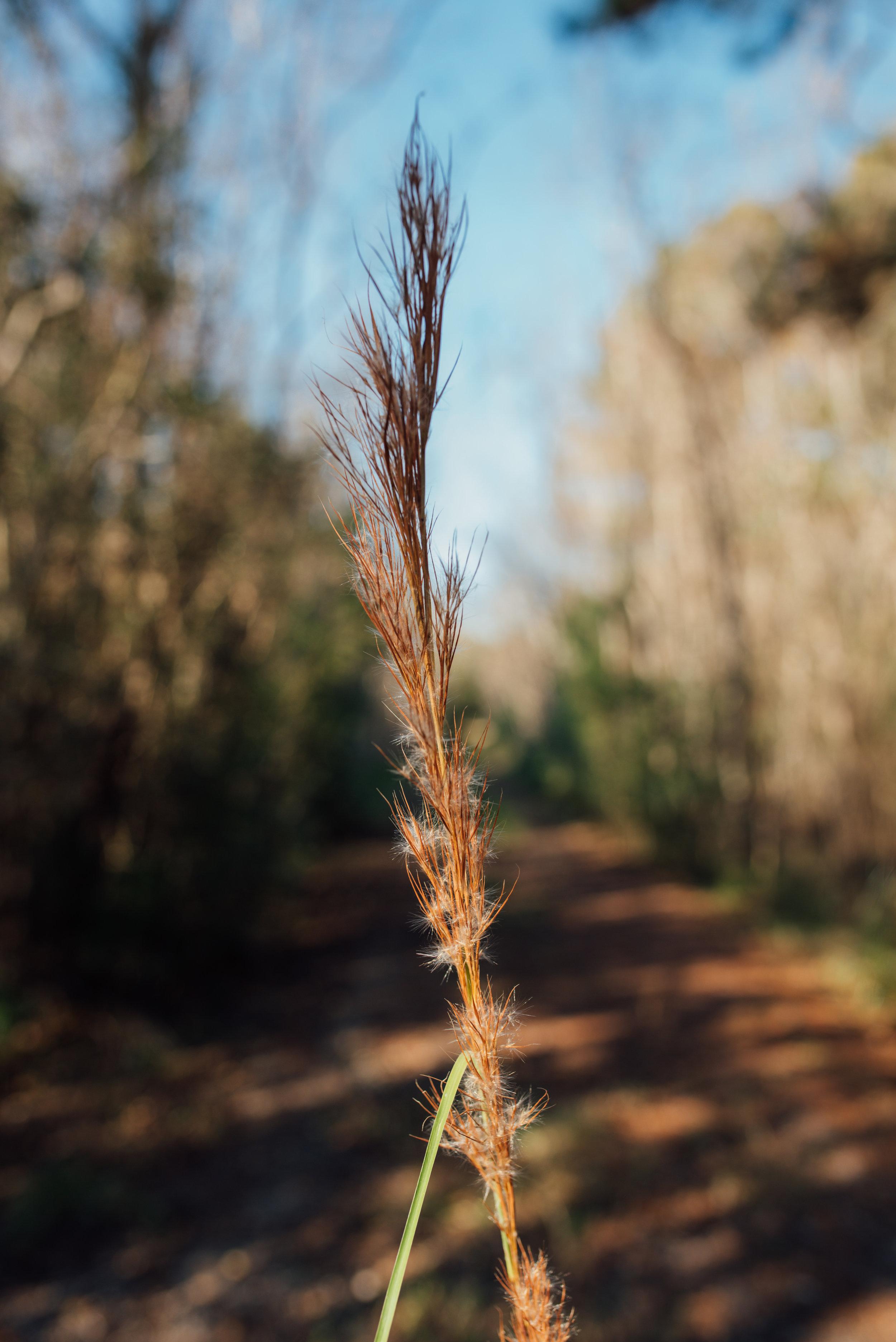 trail6.jpg