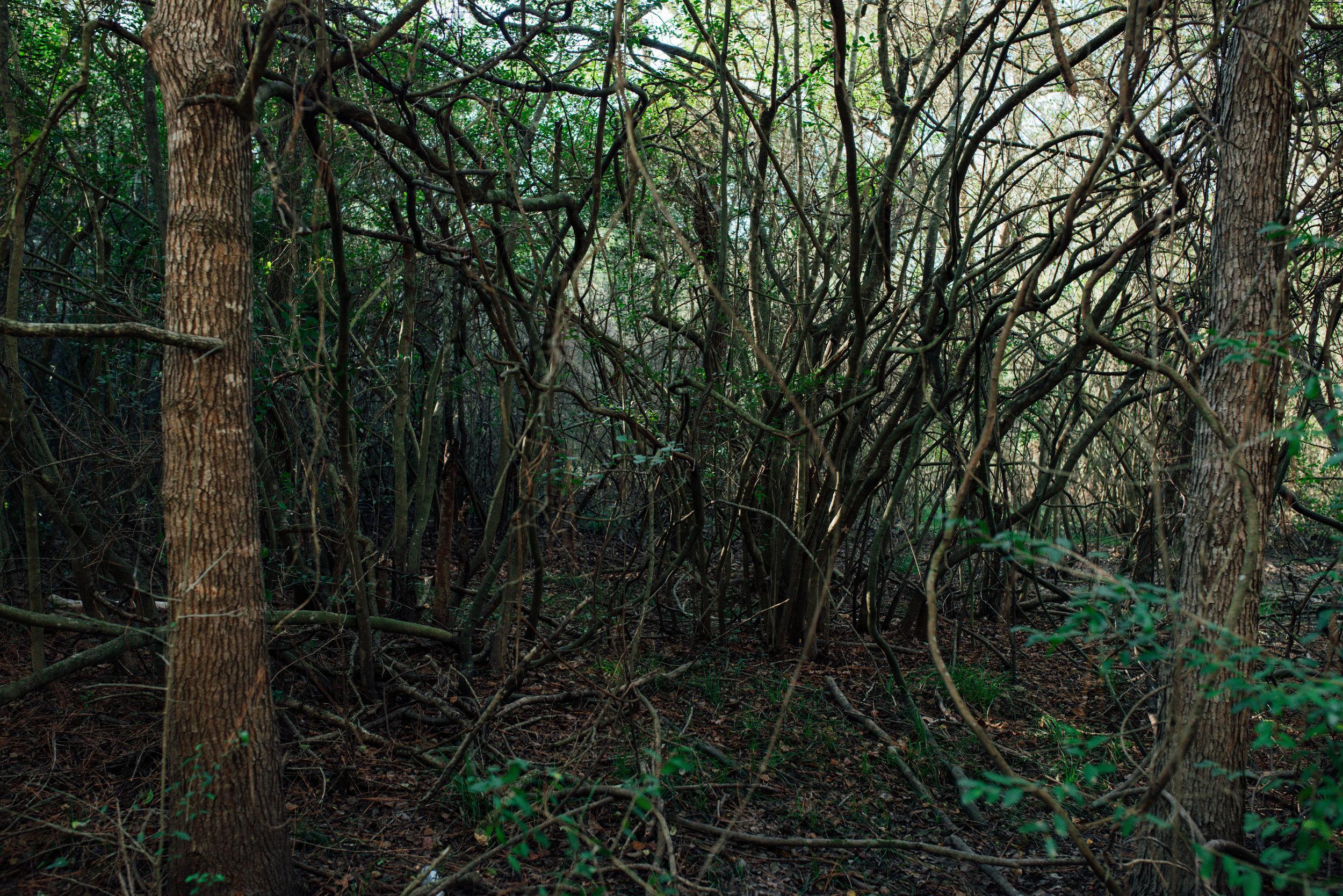 trail10.jpg
