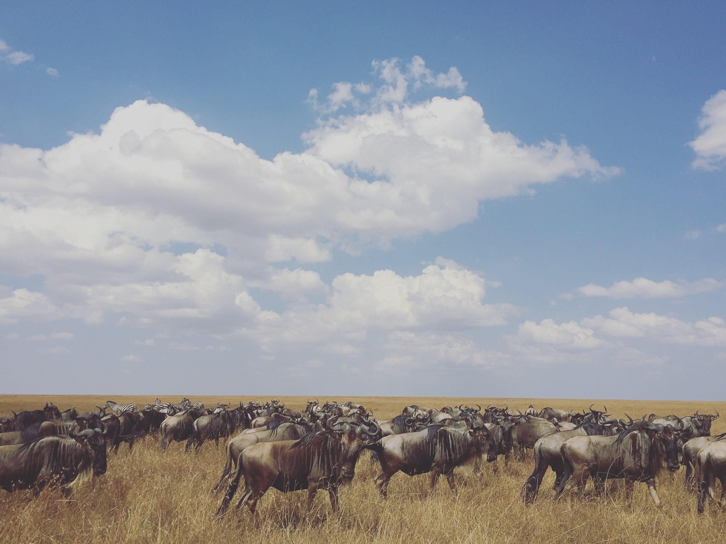SEBU-MassaaiMara,Kenya-2016-03.jpg