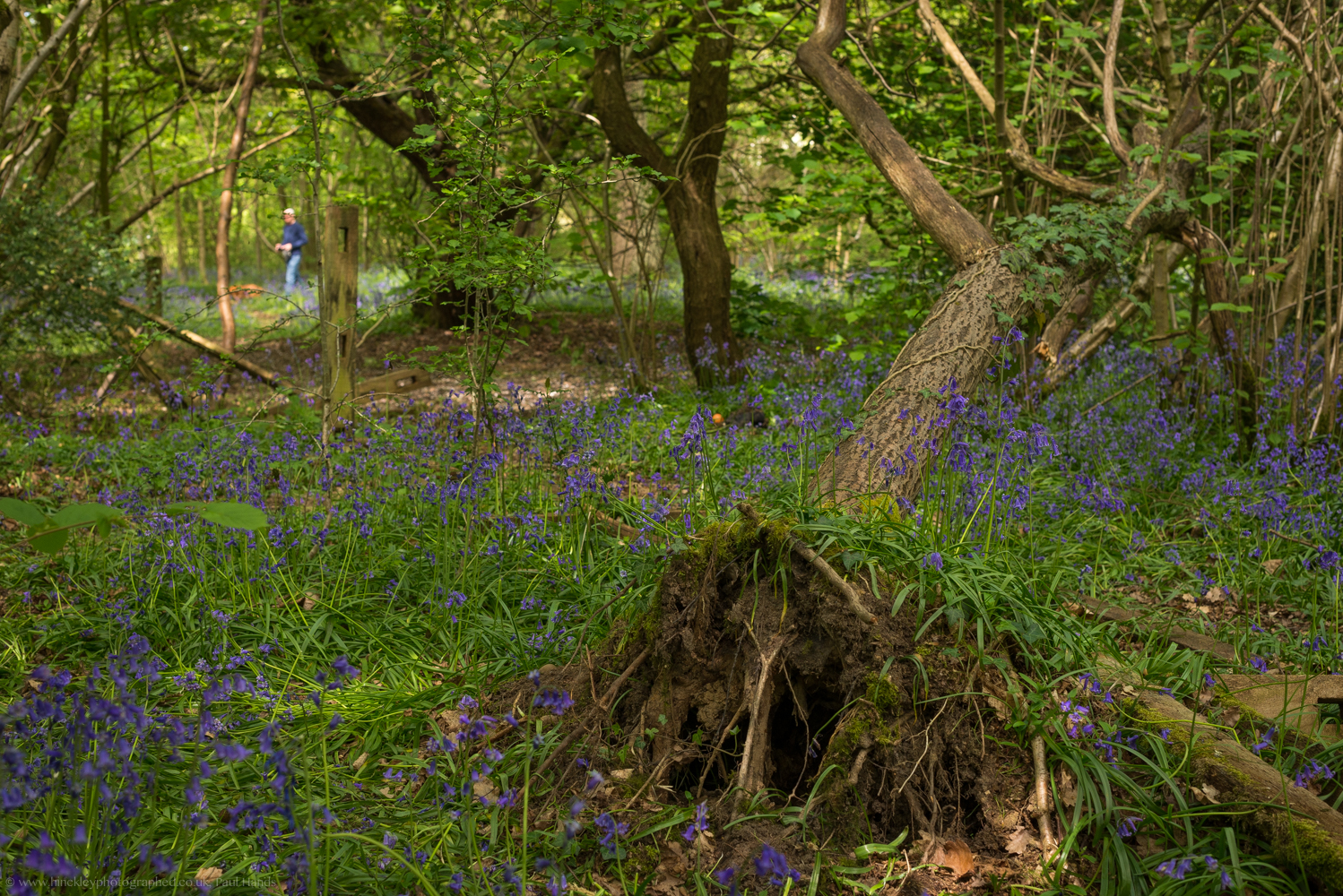 Burbage Common, Bluebell Woods, Hinckley, Paul Hands, Hinckley & Bosworth Photographed