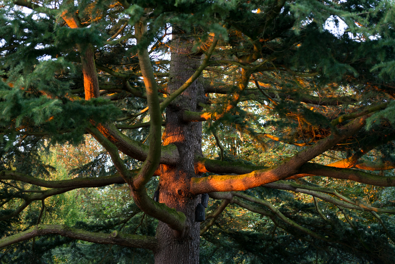 Hollycroft Park Pictures Hinckley