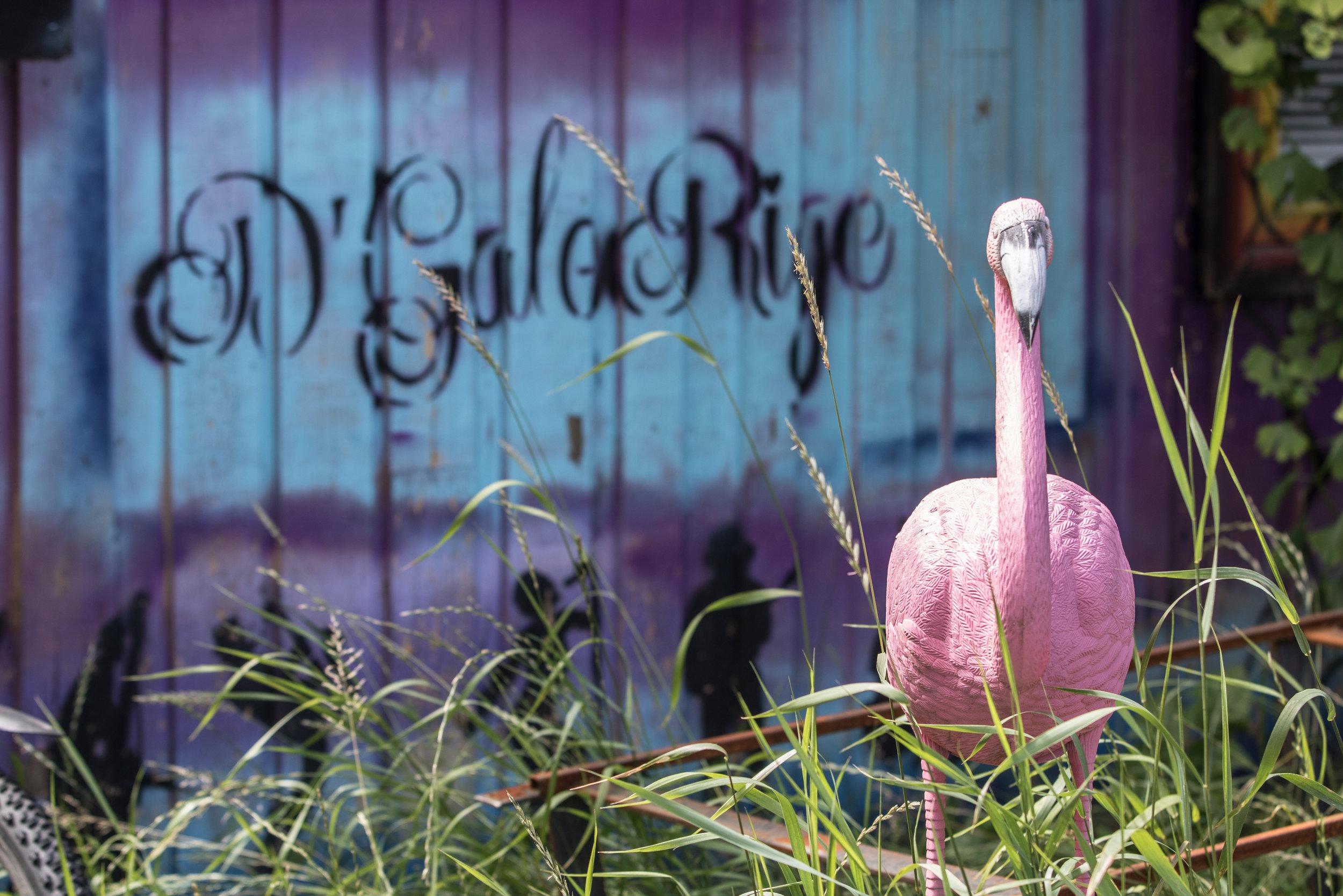 Pink Flamingos. Jeg er sikker på, at ejeren er gået efter en smule Miami Vice stemning her.