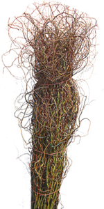 Curly Willow.png