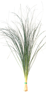 Beargrass.png