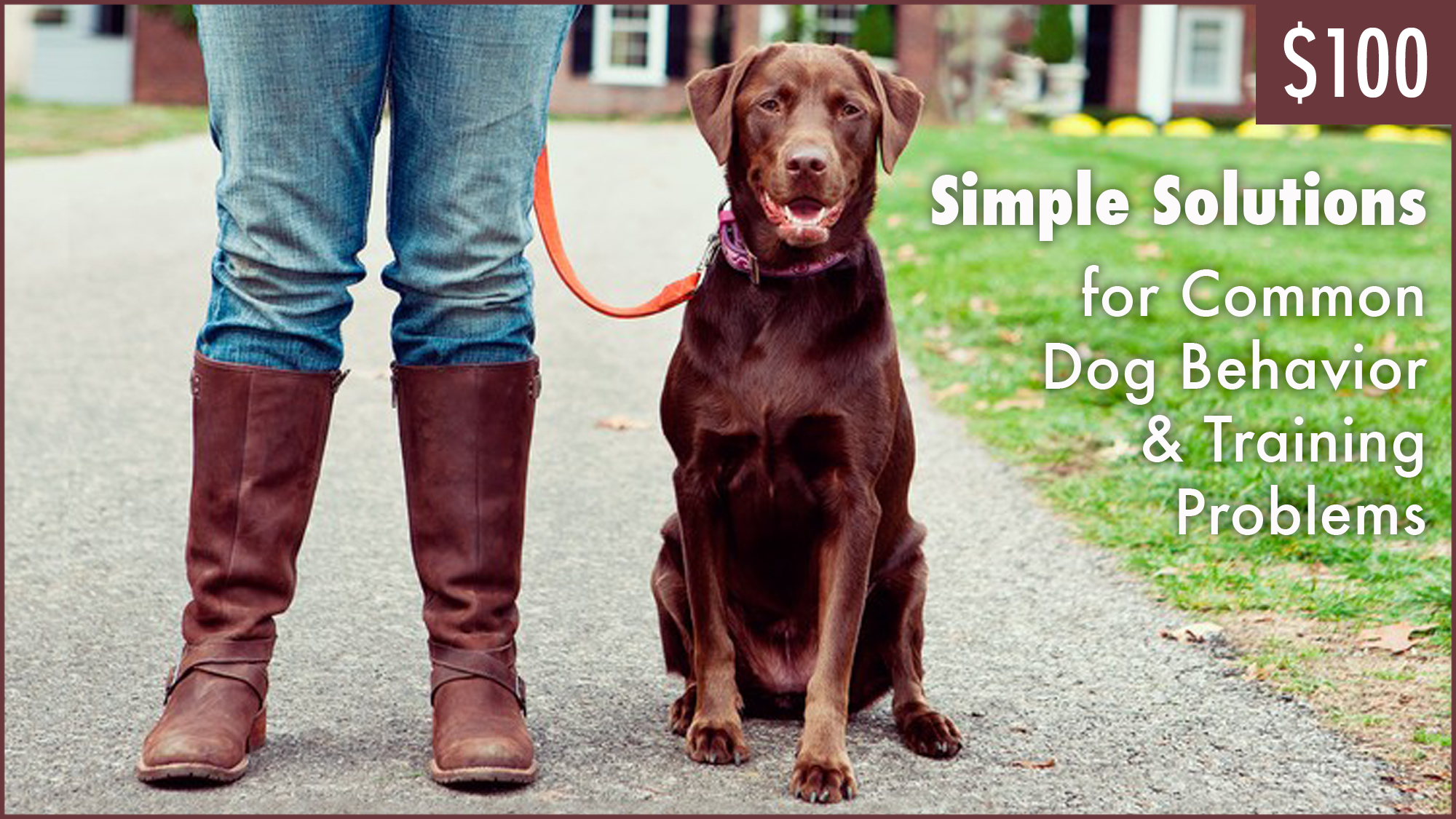 Simple Solutions for Common Dog Behavior & Training Problems