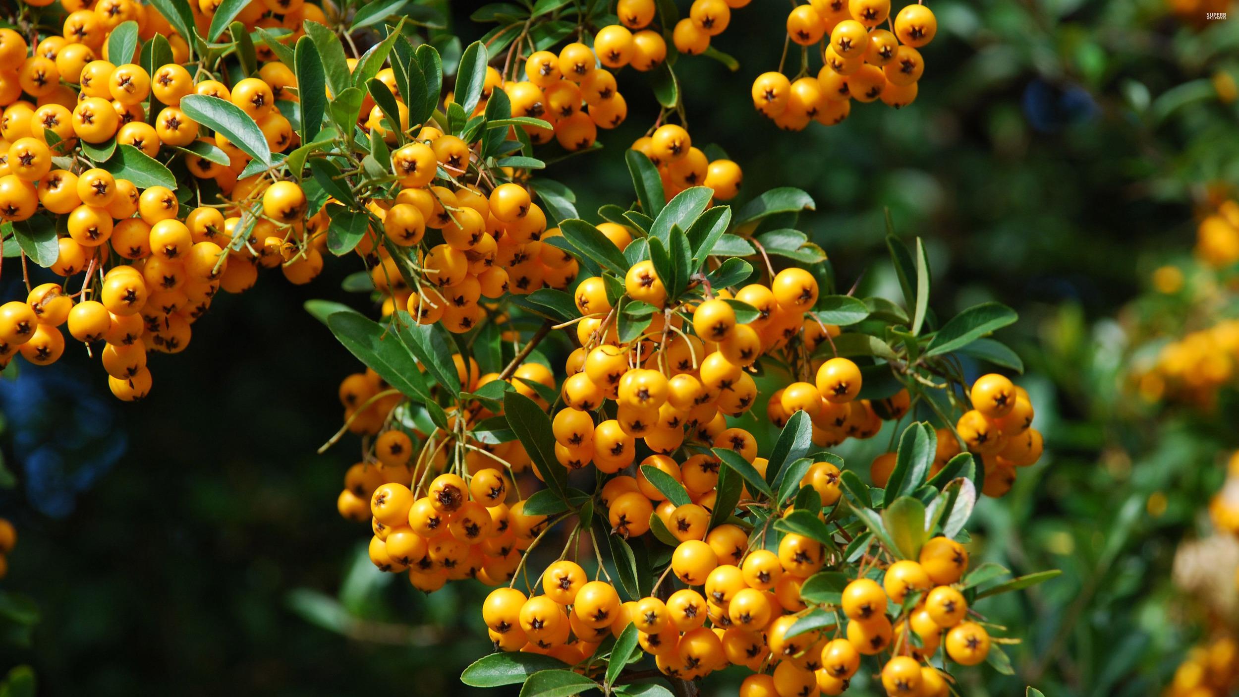 small-fruits-398.jpg