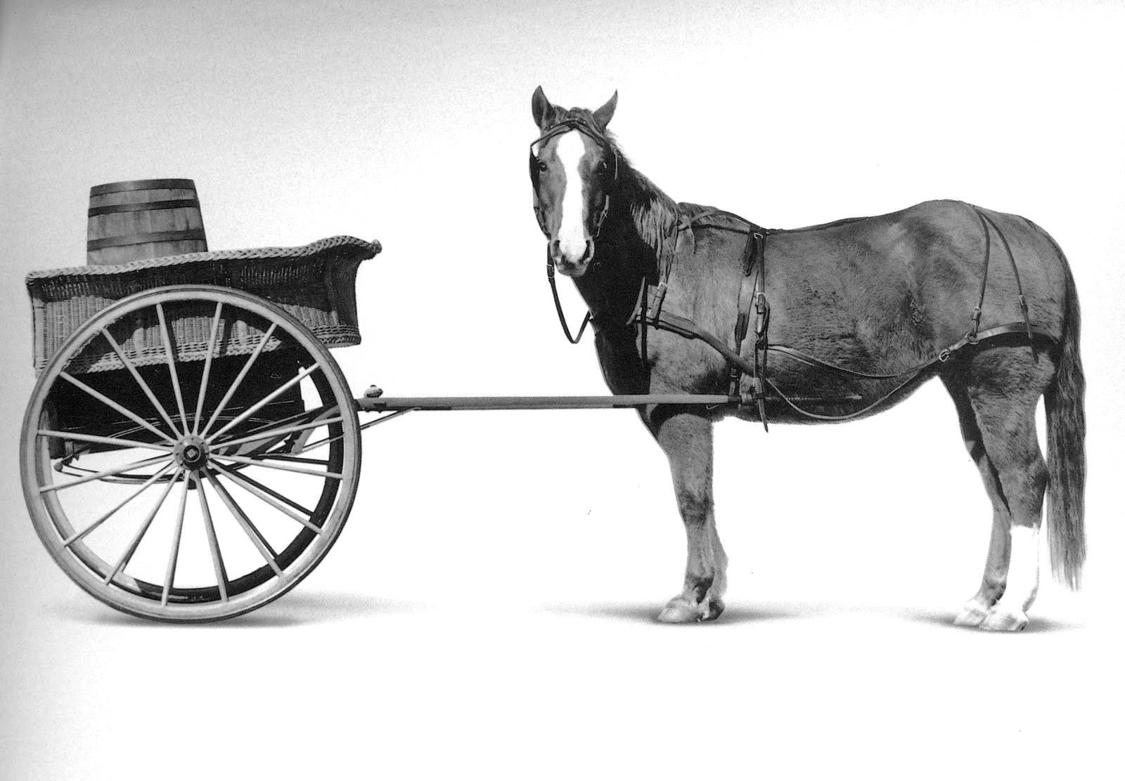 cart-horse-horse-cart.jpg