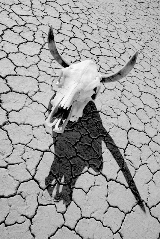 skull_desert.jpg