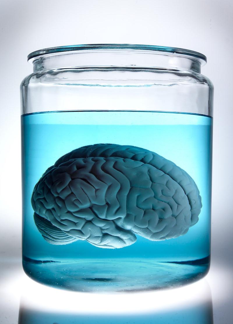 1115-08-brain-p.jpg