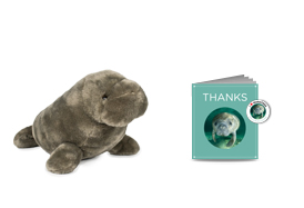 Gifts for Tree-Hugging Kiddos - Sierra Club Adopt a Manatee