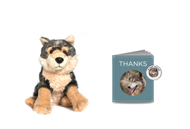Gifts for Tree-Hugging Kiddos - Sierra Club Adopt a Grey Wolf