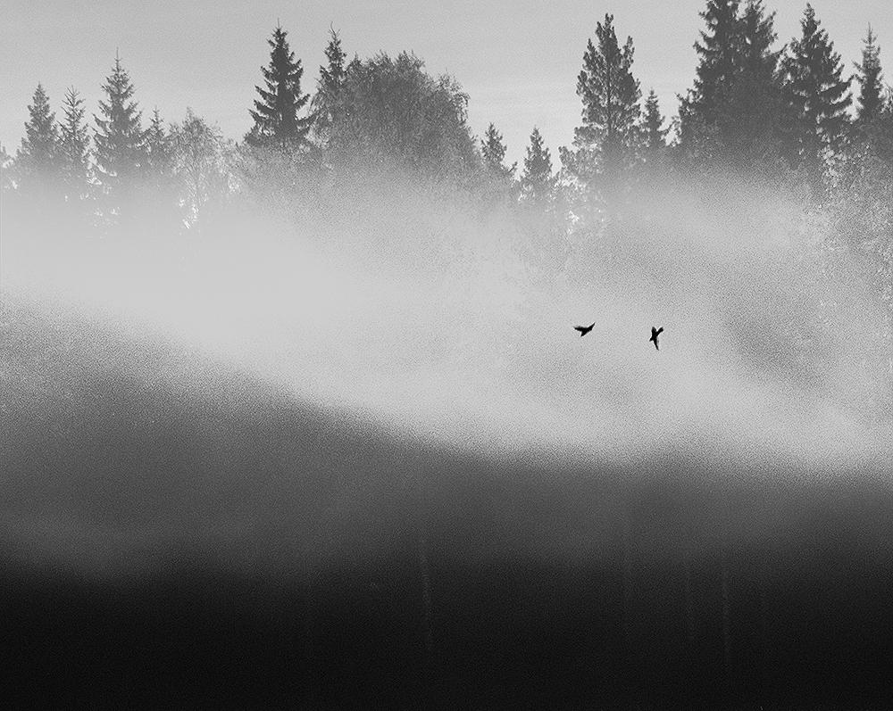 Quiet Melancholy (2013)